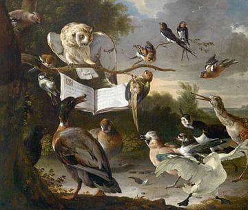 Vogelkonzert mit dem bedrohten Schwan