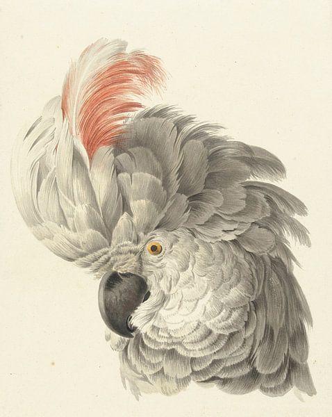 Kopf eines Kakadus, Aert Schouman von Meesterlijcke Meesters