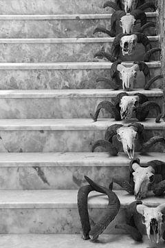 Schedels van rammen in een rij op een trap. Skulls zwart wit van Bobsphotography