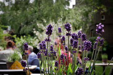 Utrech - Oude Hortus terras met lavendel op de voorgrond van Wout van den Berg
