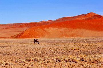 Oryx, rode duinen, Namibië