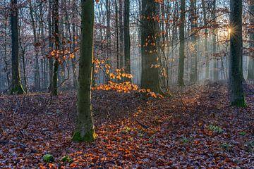 Zonnestraal in het winterbos van Uwe Ulrich Grün