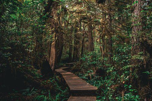 Wandelen door de jungle van Vancouver Island, Canada