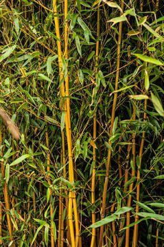 Bambus von Norbert Sülzner