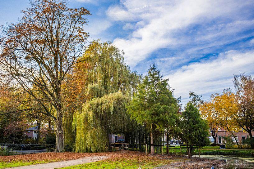 Park van Thomas van der Willik