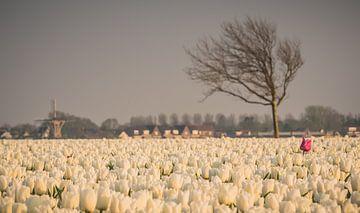 Hollands Plaatje- Molen met tulpen von Jolanda Wisselo