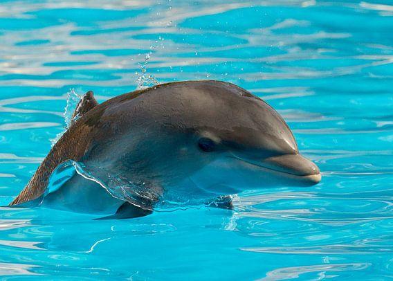 Delfin Ilse van Ulrich Brodde
