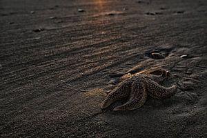 Zeester op het strand van