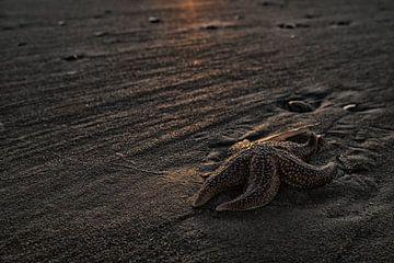 Étoile de mer au coucher du soleil sur la plage sur Gonnie van de Schans