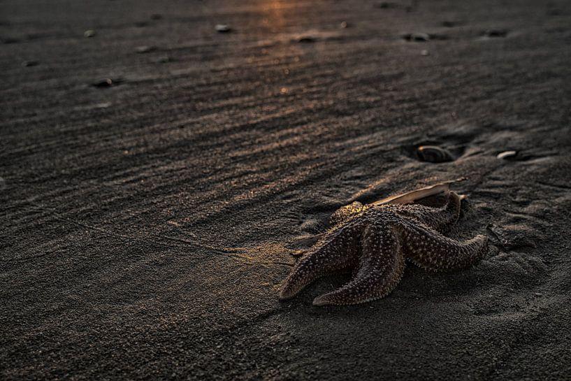 Zeester op het strand van Gonnie van de Schans