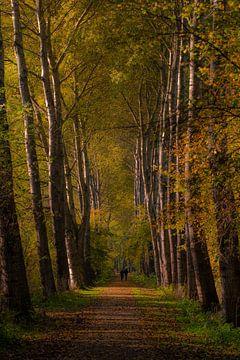 Naturpark Lelystad von Michel Van Giersbergen