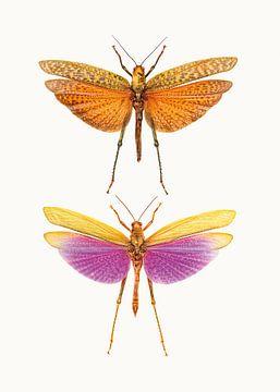 Rariteitenkabinet_Insecten_01 van Marielle Leenders
