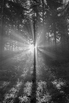 Zonnestralen in het bos sur Elroy Spelbos