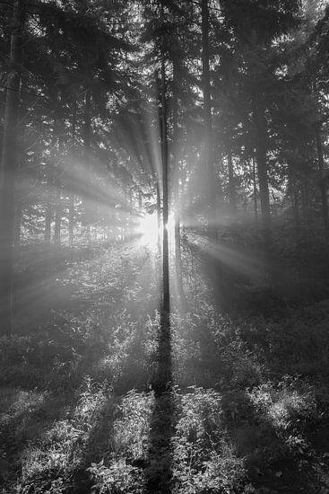 Zonnestralen in het bos van Elroy Spelbos