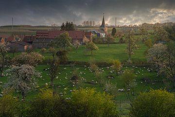 Vredige lente momenten van Joris Pannemans - Loris Photography