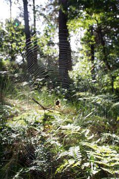 Spinnenweb von Mark Scholten
