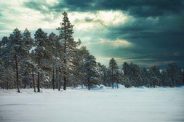 Parc national trilatéral de Pasvik sur Kai Müller