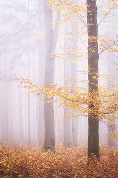 Les dernières feuilles dans la forêt
