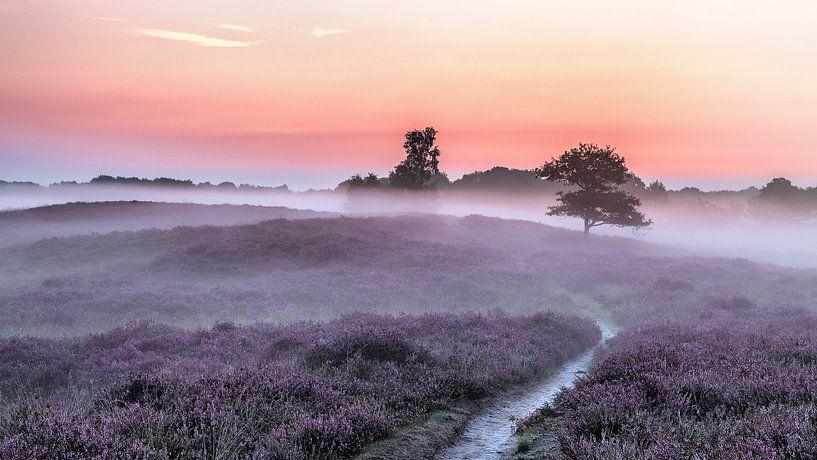 Gasterse Duinen pad en bomen paarse heide en mist van R Smallenbroek
