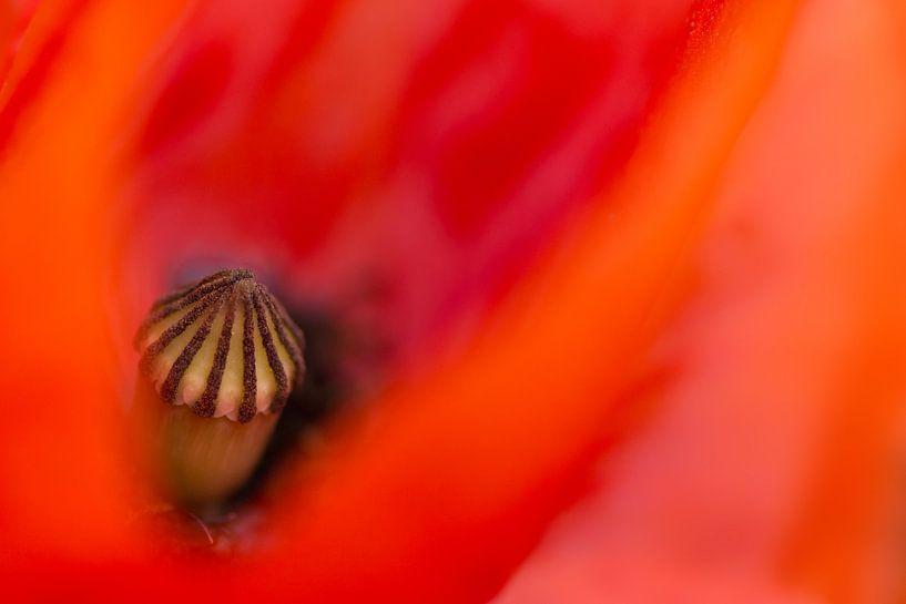 The hart of the poppy van Greetje van Son