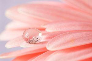 Close up druppel op een bloemblaadje van Anne-Marie Pannekoek