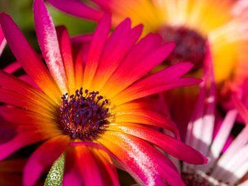 Fleur III - Blumen von Herma Egberts