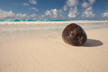 Noix de coco sur Paradise Beach sur Jiri Viehmann