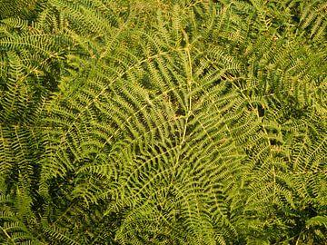 abstract groen lijnen van