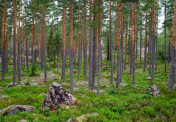 Paysage suédois 001 sur Geertjan Plooijer