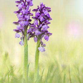 kleine orchidee van Daniela Beyer