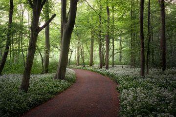 Ein Spaziergang durch den blühenden Wald von Edwin Mooijaart