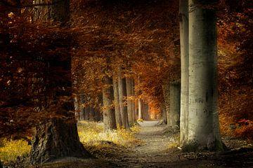 Dunkles Licht von Kees van Dongen