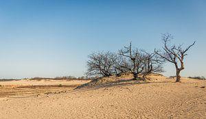 Dode bomen in het zand