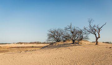Tote Bäume im Sand von Ruud Morijn