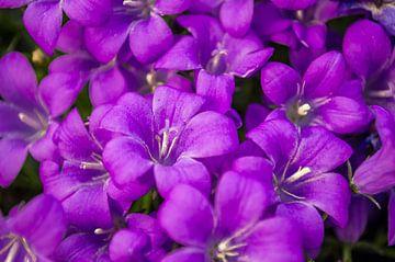 Bloemen maken blij van Brian Morgan