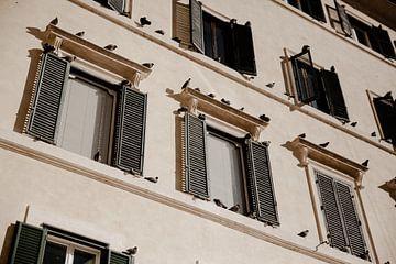 Rom-Tauben von Isis Sturtewagen