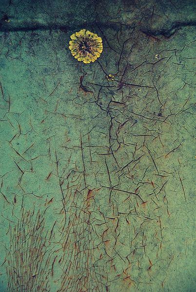 muur bloem van Annemie Hiele