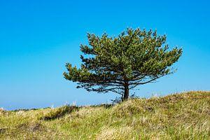A single tree with blue sky