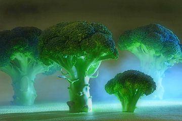 Het Broccoli Bos van Ingo Laue
