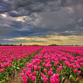 wolkendek met onweer boven een bloemenveld met tulpen van eric van der eijk