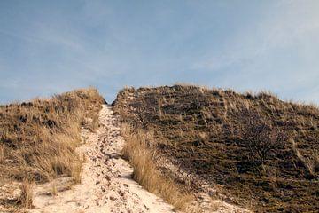 Schoorlse duinen van David Klumperman