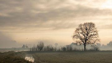 Nebliges Midden-Delfland am frühen Morgen von Bas Ronteltap