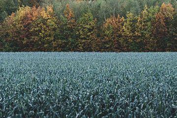 """Limburg """"het herfst Weiland"""". van Onno Alblas"""