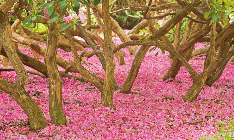 Pink Forest van Miranda Bos