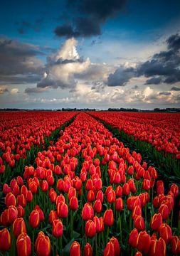 Sans fin champ de tulipe rouge sur Erik Keuker