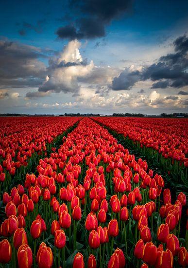 Eindeloos rood tulpenveld van Erik Keuker