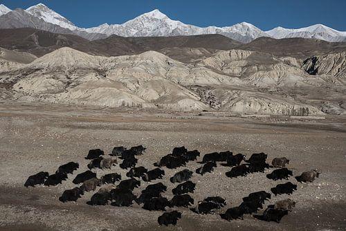 Wandelen in de Himalaya van Photolovers Reisfotografie