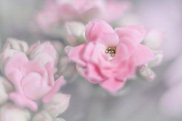 fleur sur Vliner Flowers