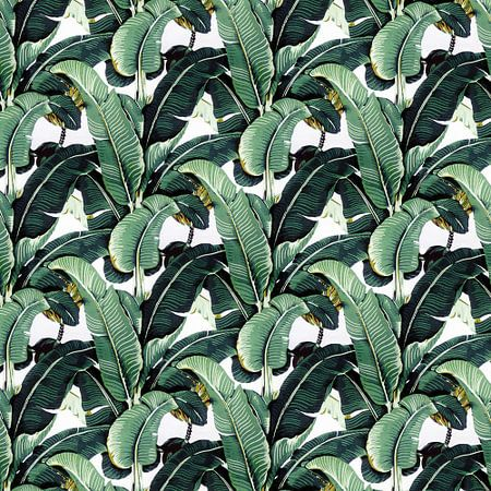 Matinique Banana Leaf 3