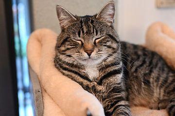 Grijs gestreepte kat liggend op krabpaal in huis van JGL Market